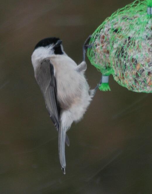 lille fugl i haven